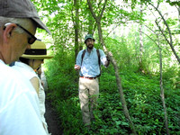 Salem Woods Tree ID and Forest Ecology Walk- 7/12/14